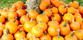 Pumpkin Picking Near Lancaster Pa by Pumpkin Patches Aplenty In Middle Tennessee Things To Do