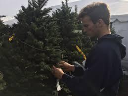 Silver Tip Christmas Tree Sacramento by Christmas Trees For Sale Christmas Tree Stands Abel U0027s Christmas