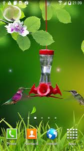 Animated Hummingbird Wallpaper PK741 HDQ Pictures