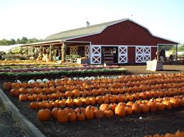 Pumpkin Picking Farms In Maryland by Fall Décor U0026 Pumpkins Nj Farms View Farm