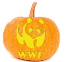 Easy Tardis Pumpkin Stencil by 28 Best Holiday Pumpkin Carving Images On Pinterest Pumpkin