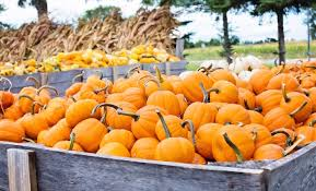 Pumpkin Patch Pasadena Tx by 30 Ways To Celebrate Halloween In Los Angeles