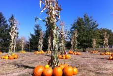 Canby Pumpkin Patch by Haunted House Portland Hubbard Pumpkin Patch Portland
