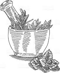Mortar With Herbals Drawing Stock Vector Art & More of