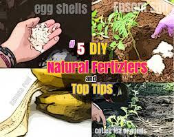 Homemade Fertilizer For Pumpkins by Diy Herb Garden Ideas 5 Growing Cilantro Step By Step Care
