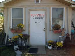 Do Miniature Pinschers Shed A Lot by Puppies For Sale Ashcraft Kennels