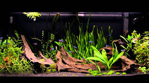 180L Juwel Rio Planted Dwarf Cichlid Tank - New Substrate And New ... Httpwwwaquariuesigngroupcomdataphotos Low Tech Tank Showandtell Low Tech Can Be Lush Too The Aquascaping Styles Aquariums Planted Aquarium And Fish Tanks 101 Best Small Size Images On Pinterest Aquarium Nature Style Aquascape Awards Best Substrate For Betta 268993 Concave Convex Triangular Rectangular Aquascapes Aquascapers With Plastic Plants Only _ Ideas 106 Fluval Edge Inspiration Ohko Stone Forum Art Theories Tips Keeping Basics Love
