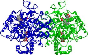 Aspirin For Christmas Tree Life by Biological Crystallography365