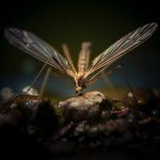 juckreiz nach mückenstichen los werden das hilft wirklich