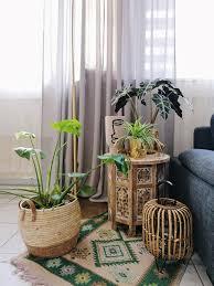 meine pflanzenecke im wohnzimmer pflanzenliebe pflanzen