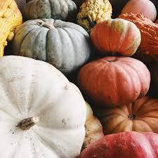Pumpkin Patch Dfw Metroplex by Dallas Farmers Market Fun Things To Do In Dallas Tx