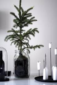 Christmas Tree Saplings For Sale Ireland by 103 Best Seasons Images On Pinterest Christmas Ideas Christmas