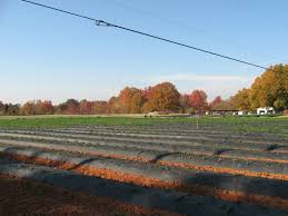 Pumpkin Patch Charlotte Nc Providence Rd by Hall Family Farm Localharvest