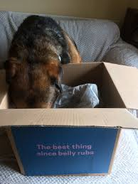 The Canine Team Reviewed Butternut Box's Fresh Food Lintran Dog Transit Box In Chesterfield Derbyshire Gumtree Cab 5 Animal Boxes Fitted Dog Box Best Fit For Vw Touareg Maryland Sled Adventures Llc New Truck Project 2 Hole Alinum 200 Gift Corgi Stock Illustration 506388 Ideas Custom Alinum Biggahoundsmencom The Dapper October 2017 Subscription Review Coupon Working Truck Dogs Housed Metal Boxes Located Under Semi Used Kennel Suppliers And