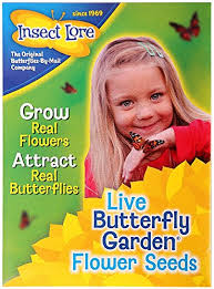 Butterfly Garden Gift Set with Live Cup of Caterpillars Smart