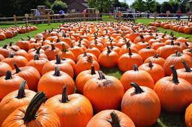 Best Pumpkin Patches Near Milwaukee by Six Great Apple Orchards And Pumpkin Patches In Northeast