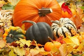 Fargo Moorhead Pumpkin Patches by Pumpkin Production Interest Surging In North Dakota And Minnesota