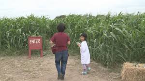 Pumpkin Patch College Station Tx by Aggie Corn Maze Is Officially Open For The Season