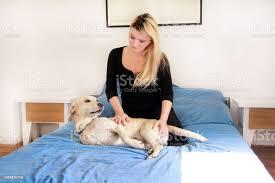 frau mit ihrem hund im bett zu hause im schlafzimmer schönes mädchen ist zusammen zu spielen und schmusen mit hund im bett gelber labrador retriever