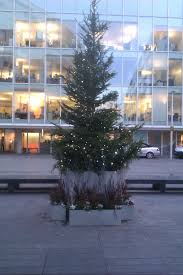 10ft Christmas Tree Uk by Live Christmas Trees For Rent From Superplants Superplants