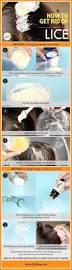 Fresh Drop Bathroom Odor Preventor Ingredients by Best 25 Lice Prevention Ideas On Pinterest Lice Prevention