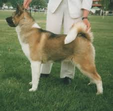 No Shed Dog Breeds Large by The Most Popular Large Dog Breeds And How To Care For Them