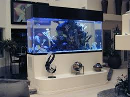 10 best aquarium images on the gallery wall