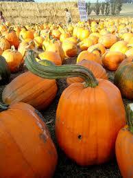 Peter Pumpkin Patch Petaluma by A Very Pumpkin Weekend Freshforthought