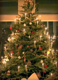 Harrows Christmas Trees Nj by Incredible Ideas Christmas Tree Candles Amazon Com Candle By The