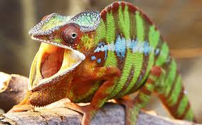 Iran Accuses West Of Using Lizards For Nuclear Spying | The Times Of ... Lizard Zuk A11b V10 Ls17 Farming Simulator 17 Mod Fs 2017 The Dark Underbelly Of Truck Stops Pacific Standard Pin By Chrimmons On Aesthetics Pinterest Palm Semi Trucks And Rigs I Do Custodial Work At Truck Stops Overnight Ama Iama Lot Lizards Birds Old Loves Allan C Weisbecker Groundbrkingbeatz Thats That 3am Lot Lizard Stop 7 Deadly A Handy Field Guide For Lizardwatchers Beans The Loose Overnight Stop A Reports Lizards Being Taken Spurs Doc Call Otago Daily Times Biologists Remove Invasive Tegu Threatening Floridas Back Off Mustache Coffee With Sapp Brother Truckstop Prostution