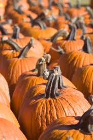Pumpkin Patch Dixon Il by Pumpkin Patch Jonamac Orchard Your Family U0027s Fall Tradition