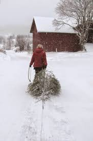 Longest Lasting Christmas Tree by 299 Best Bringing Home The Tree Images On Pinterest Merry