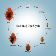 Bedbugs Affordable Pest Control Inc Harrisonburg VA