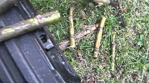 Planting Sugar Cane In Florida Like They Do It Cuba