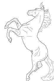 Arabian Horse Coloring Pages Rearing In Horses Page Cute Realistic