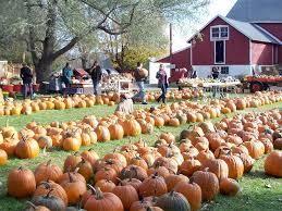 Best Pumpkin Patches Near Milwaukee by Jim U0027s Pumpkin Farm Offers Lots Of Cheap Autumn Fun Onmilwaukee