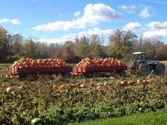 Pumpkin Patch Caledonia Il For Sale by South Barrington Illinois Real Estate And South Barrington