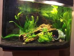 Terrific Freshwater Fish Tank Ideas 22 For Your Home Decor Photos ... Fish Tank Designs Pictures For Modern Home Decor Decoration Transform The Way Your Looks Using A Tank Stunning For Images Amazing House Living Room Fish On Budget Contemporary In Contemporary Tanks Nuraniorg Office Design Sale How To Aquarium In Photo Design Aquarium Pinterest Living Room Inspiring Paint Color New At Astonishing Simple Best Beautiful Coral Ideas Interior Stylish Ding Table Luxury