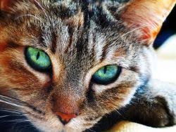 signs of worms in cats worms in cats symptoms rowland98