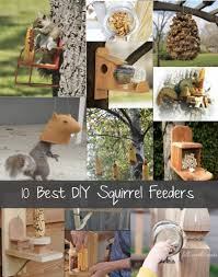 Squirrel Feeder Adirondack Chair by 10 Best Diy Squirrel Feeders U0026 Speciality Http Homestead And