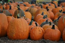 Pumpkin Patch Prince Frederick Md by Find Corn Mazes In Middletown Maryland Jumbo U0027s Fairy Tale Trails