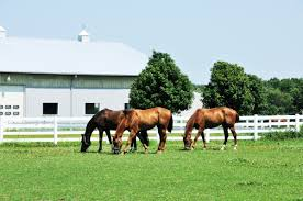 Controlling Nuisance Birds - The #1 Resource For Horse Farms ... Defeat The Enemy Fly Control Options For Horse And Barn Music Calms Horses Emotional State The 1 Resource Breyer Crazy In At Schneider Saddlery Horsedvm Controlling Populations Around Oftforgotten Bot Equine Dry Lot Shelter Size Recommendations Successful Boarding Your Expert Advice On Horse 407 Best Barns Images Pinterest Dream Barn Barns A Management Necessity Owners Beat Barnsour Blues Care Predator Wasps Farm Boost Flycontrol Strategies Howto English Riders