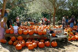 Pumpkin Patch Cal Poly Pomona by Petting Archives Project Refined Life