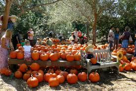 Live Oak Canyon Pumpkin Patch 2015 by Pumpkin Patch Archives Project Refined Life