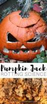 Books About Pumpkins Preschool by Pumpkin Jack Fall Rotting Pumpkin Science Experiment