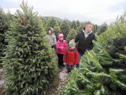 Ticks On Christmas Trees by Tips For Picking The Right Christmas Tree The Morning Call