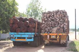 100 Truck Nuts Illegal Oxpeckers From Mozambique To China Money Talks