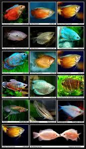 Decorator Crab Tank Mates by Best 25 Fish Tank Sizes Ideas On Pinterest Aquarium Ideas Fish