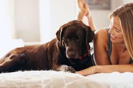 wo soll mein hund schlafen das musst du unbedingt
