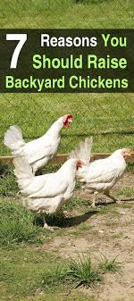 223 Best Backyard Chickens Images On Pinterest | Backyard Chickens ... Best 25 Chicken Eggs Ideas On Pinterest Coops Raising Backyard Eggonomics How Much Does It Really Cost To Raise 4 Benefits Of A Mixed Flock Chickens 2599 Best Hshall Things Poultry Images Farm Fresh Are The Here Five Reasons Start 223 Chickens To The Freerange Eggs Youtube Cheap Ducks For Find Deals Ameraucana Post Tagged Ameraucana Hencam Cardinals Start In 7 Simple Steps Wholefully